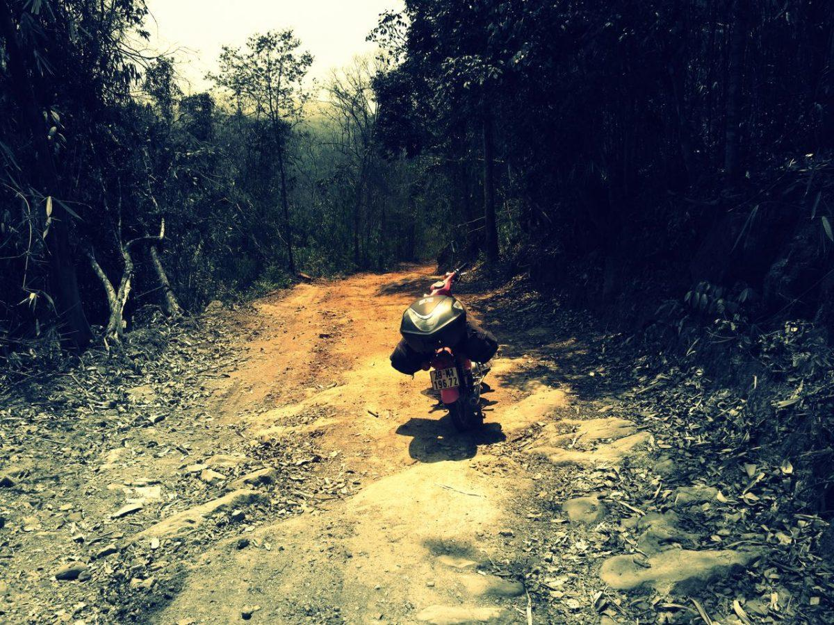 Short Ride Jungle